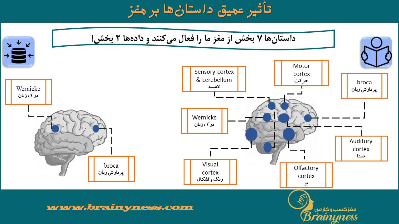 داستان و مغز
