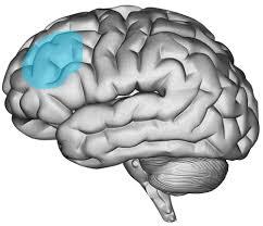 Brainyness- DLPFC01